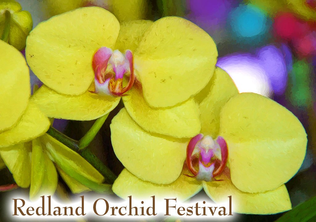 Redland Orchid Festival