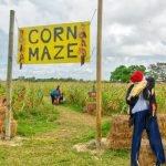 Burrs Berry Farm - Corn Maze